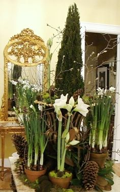 Christmas Offerings Floral and Hardy Farm Organic Cut flowers amaryllis paperwhites christmas wreaths dried flowers Welcome to our home on the web!