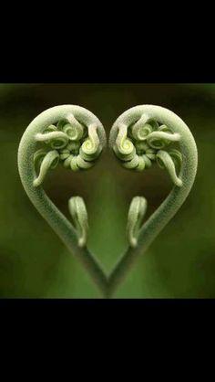 #heart #NatureHeart #plants