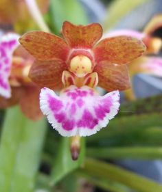 Strange Flowers, Unusual Flowers, Unusual Plants, Rare Flowers, Exotic Plants, Amazing Flowers, Beautiful Flowers, Rare Orchids, Purple Orchids