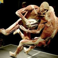Gunther von Hagens is the artist, I think. Body World exhibit. Rugby Memes, Rugby Funny, Rugby Muscle, Rugby Workout, Gunther Von Hagens, Rugby Poster, All Blacks Rugby Team, France Rugby, Visual And Performing Arts