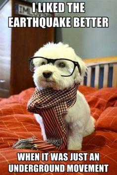 Hipster dog.