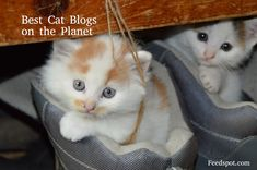 Top 100 Cat blogsCat Blogs Top 100 ListLove cats and looking for information on cats? Whether you are already a cat owner or looking to home a cat, reading cat blogs can be your guide to everything cats. So we have compiled the Best 100 Cat Blogs list which provide inspiring, beautiful and...