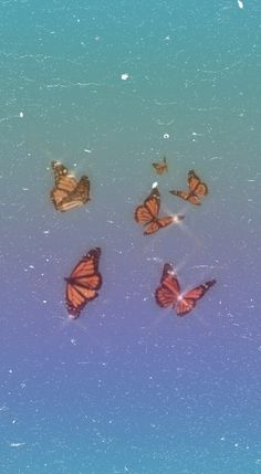 Rainbow Butterfly Wallpaper