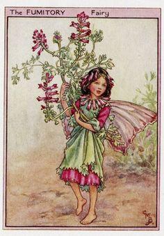 cicely mary barker flower fairies - Hledat Googlem