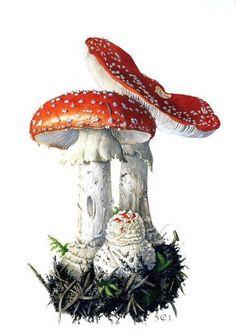Mushroom Drawing, Mushroom Art, Botanical Drawings, Botanical Prints, Illustration Botanique, Flora Und Fauna, Nature Illustration, Painting & Drawing, Watercolor Paintings