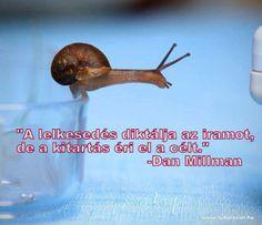 Dan Millman idézete a kitartásról. A kép forrása: Tudatos életmód # Facebook