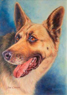 A custom memorial portrait I created from a B & W photo. #alsatians #dog paintings #custom pet paintings #dog portraits #memorial dog portraits # quality pet portraits