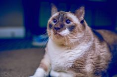 I was told that this sub might like this guy. He passed away this weekend at age 22. RIP Tac, you will be missed. (x-post r/cats) - credit to: swipurr.com