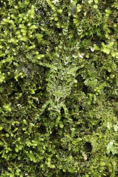 Uma lagartixa se esconde em meio à vegetação com sua camuflagem natural Foto: The Grosby Group