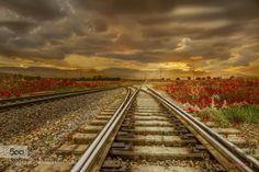 The railway to greatness by NezirAras  Sunset beautiful blue clouds field flowers grass green light poppy popy field red sky sun sunset tre