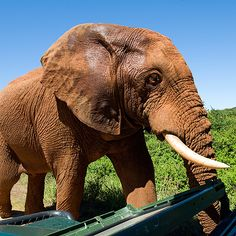 31 THINGS TO DO WHEN YOU ARE LOST IN THE KRUGER NATIONAL PARK! www.upsouthadventures.com #adventure #travel #southafrica
