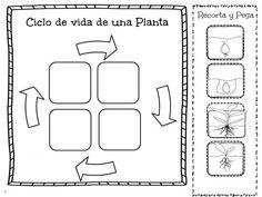 Menta Más Chocolate - RECURSOS PARA EDUCACIÓN INFANTIL: Actividades sobre el CICLO DE VIDA de las PLANTAS