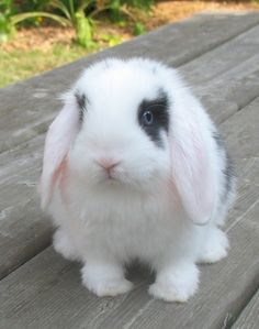 Big Bunny, Cute Baby Bunnies, Cute Baby Animals, Cute Babies, Cute Dog Wallpaper, Cute Bunny Pictures, Honey Bunny, Guinea Pigs, Cats And Kittens