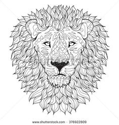 Hand drawn lion head . Isolated on transparent background. anti stress Coloring Page Vector monochrome sketch.