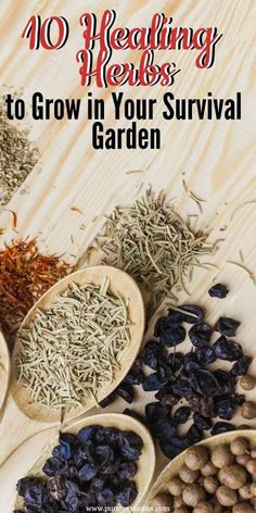most powerful natural antibiotic, the very best means to create and also raise our immune system as well as fight versus virus Natural Cough Remedies, Herbal Remedies, Health Remedies, Home Remedies, Natural Cures, Natural Healing, Permaculture, Healthy Tips, Healthy Recipes