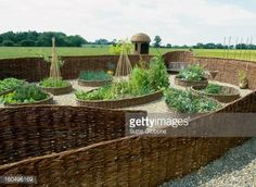 Stock Photo : Willow (Salix) fencing and raised beds in potager garden