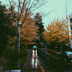 #rainy #streets #autumnleaves #vsco