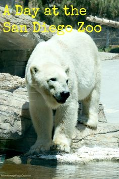 Our day at the San Diego Zoo. Family Travel San Diego California Vacation Destinations Ideas Attractions