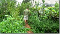 Perennial Abundance – over 200 Food Plants on Just a Tiny 1/10th Acre of Cold Climate Urban Land This is brilliant. I'm currently reading Paradise Lot by Eric Toensmeier so was very happy to find this pin. :)