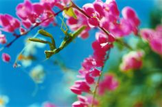 photo / flowers | Mika Ninagawa Official Site
