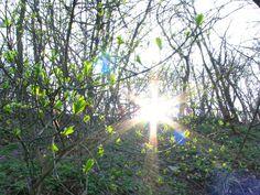 tavasz a Gellért hegyen