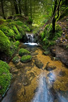 Dartmoor National Park | Devon | England