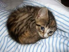 5 Pets picture you must see before you die.. 1st is The cutest and the most innocent kitten in the whole world. Click the pic for full list