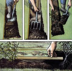 Кустарники для живой изгороди: виды, посадка и уход (фото) - строительство