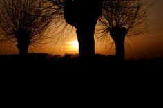 #sunset in drie #wilgenbomen