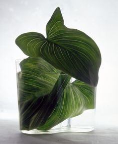 ||FLORAL DISPLAY | exotic leaves in a glass tank vase