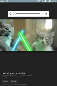 Kitten star wars