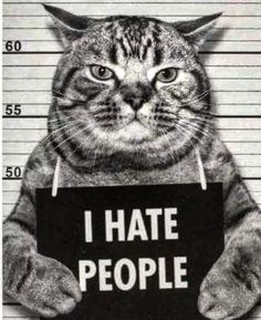 Cat meme - I hate people I Hate People, Cat People, Funny Cat Memes, Funny Cats, Cat Spirit Animal, Arte Punk, Cute Dog Photos, Cat Posters, Cat Quotes