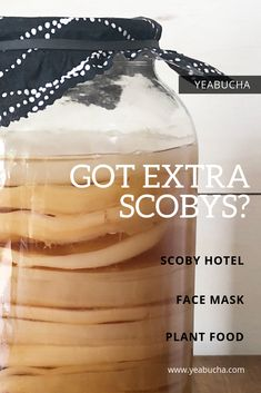 As you continue to brew your booch you'll end up with a new SCOBY after each batch. Wondering what you're supposed to do with all those extra SCOBYs? Here are a few ideas! Kombucha Flavors, Kombucha Scoby, How To Brew Kombucha, Flavored Kombucha Recipe, Continuous Brew Kombucha, Kombucha Brewing, Matcha Benefits, Lemon Benefits, Coconut Health Benefits