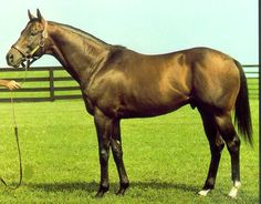 Alleged (Rated 138) - Was best remembered for winning back-to-back Prix de l'Arc de Triomphes in 1977 and 1978. Trained by Vincent O'Brien in Ireland and ridden by Lester Piggott, this front-running horse was undefeated in all but one of his appearances, when he was second to Dunfermline in the 1977 St. Leger Stakes.