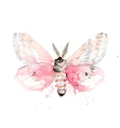 Pink Watercolour Moth Butterfly Art Print by SherylColeArt on Etsy