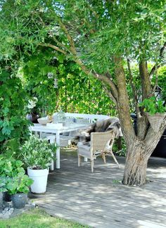 I love trees that create the roof of an outdoor room
