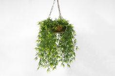 Hanging plants are so wonderful when you have limited space! Photo by Alex Rodríguez Santibáñez