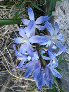 Kivijalan vieressä kasvaa kaunis kukka