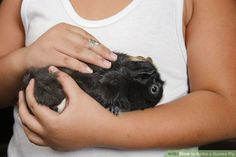 How to Bathe a Guinea Pig: 15 Steps (with Pictures) - wikiHow
