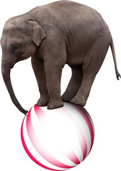 Awesome Pic Created by PhotoMontager.com Gym Equipment, Elephant, Exercise, Awesome, Sports, Ejercicio, Hs Sports, Elephants, Excercise