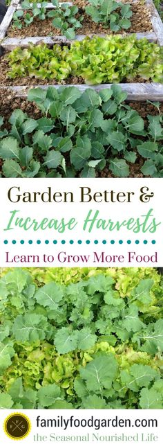 Vegetable Garden Planning for More Yields