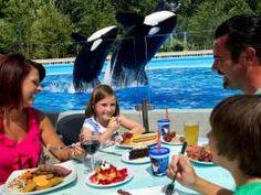 Tenha uma refeição à beira da piscina da baleia #Shamu com toda a sua família e vivam momentos inesquecíveis no  #SeaWorldOrlando. Desfrute de uma refeição deliciosa à beira da piscina e fique ainda mais perto das baleias orcas embarcando em um ambiente vibrante e vendo de perto toda a interação entre os tratadores e as orcas. #SeaWorld #Shamu