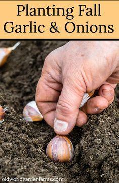 Garden Yard Ideas, Easy Garden, Edible Garden, Lawn And Garden, Garden Projects, Planting Garlic, Gardening For Beginners, Gardening Tips, Sustainable Gardening