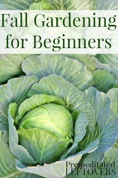 Fall Vegetable Gardening for Beginners