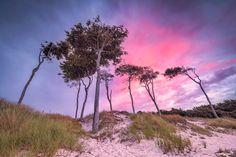 Windflüchter am Weststrand (Prerow / Darß), Baum, Dünen, Fischland, Küste, Ostsee, Prerow, Sonnenuntergang, Strand, Weststrand, Windflüchter, Wolken