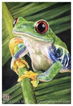 Red-Eyed Tree Frog by CamillaMalcus.deviantart.com on @deviantART
