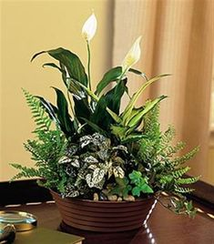 dish garden dishes and foliage plants on pinterest charming office plants