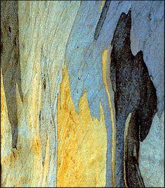 Eucalyptus Bark, Australia Mouvement pouvant évoquer le flux et le reflux des vagues sur le sable fil du bois