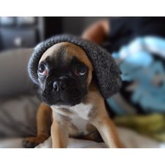"""""""so...am I cool now?"""", Hipster French Bulldog Puppy"""