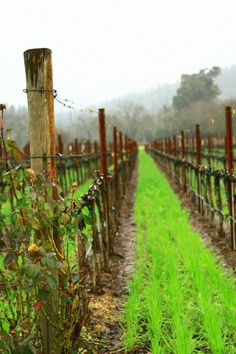 This is exactly how Napa Valley looked on our honeymoon! Places To Travel, Places To See, Travel Destinations, Caves, Wine Vineyards, Le Far West, Wine Time, Napa Valley, Arizona